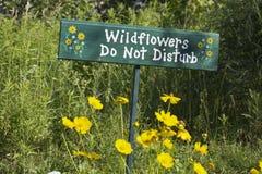 Wildflowers Imagens de Stock Royalty Free