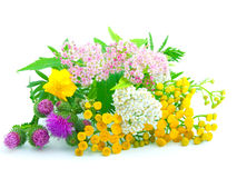 Wildflowers. A bouquet of wildflowers, isolated on a white background Stock Image