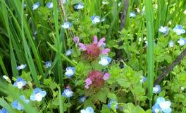 Wildflowers Stockfotografie
