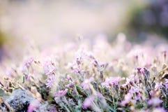 Wildflowers royalty free stock photos