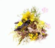 Wildflowers Stock Image