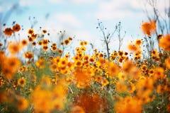 Wildflowers fotografia stock libera da diritti