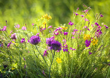 Wildflowers. And the sun behind stock photography
