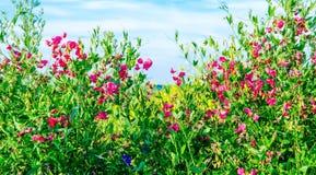 Wildflowers Photos stock
