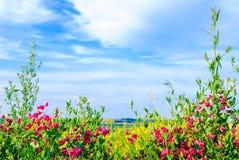 Wildflowers Images libres de droits