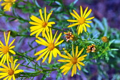 Wildflowers Royalty Free Stock Photography
