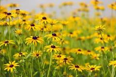 Wildflowers Stockbild