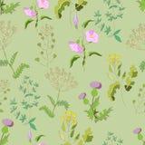 Wildflowers Image libre de droits