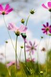 Wildflowers Royalty-vrije Stock Afbeeldingen