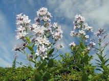 Wildflowers Royalty-vrije Stock Afbeelding