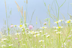 Wildflowers Imagem de Stock Royalty Free
