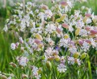 Wildflowers Zdjęcia Stock