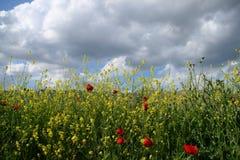 Wildflowers Stock Afbeelding