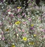 wildflowers Zdjęcia Royalty Free