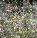 wildflowers Royalty-vrije Stock Foto's