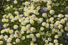 wildflowers Stock Fotografie