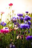 wildflowers stockfotos