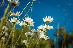 wildflowers stock foto