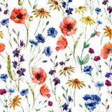 wildflowers royalty illustrazione gratis