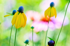 wildflowers Stockfoto