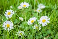 wildflowers Lizenzfreie Stockbilder