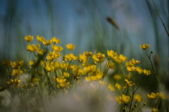 wildflowers Photos libres de droits
