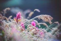 wildflowers Fotografía de archivo