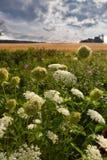 Wildflowers Στοκ Εικόνες