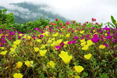 wildflowers στοκ φωτογραφία