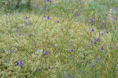 wildflowers Foto de Stock Royalty Free