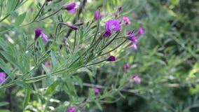 wildflowers stock videobeelden