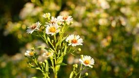 Wildflowers Стоковое Изображение RF