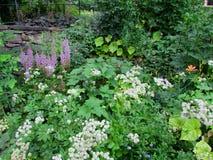 Wildflowers Стоковая Фотография