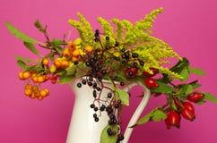 wildflowers foto de archivo libre de regalías