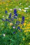 wildflowers Stockbilder