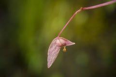 Wildflowers Стоковые Фотографии RF