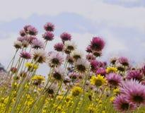 Wildflowers Stock Photos