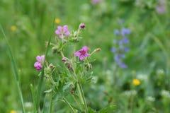 wildflowers Lizenzfreie Stockfotos
