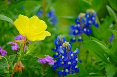 Wildflowers Стоковые Изображения