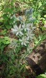 wildflowers Image stock
