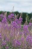 wildflowers Lizenzfreie Stockfotografie