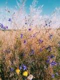 wildflowers Stock Afbeeldingen