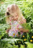 Wildflowers. Pretty little blond girl reaching down amongst the ferns to pick yellow wildflowers Stock Image