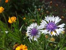 Wildflowers 3 Стоковые Изображения RF