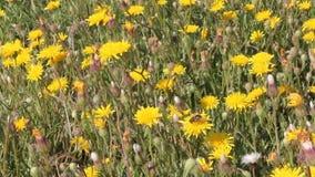 wildflowers vídeos de arquivo