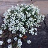 Wildflowers Στοκ Εικόνα