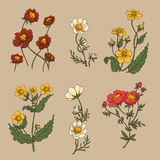 wildflowers Fotografía de archivo libre de regalías