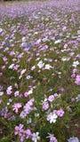 wildflowers Lizenzfreies Stockfoto