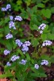 wildflowers Imagen de archivo