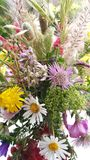 wildflowers Fotografia de Stock